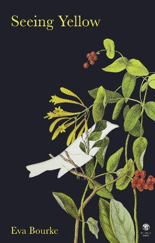 Seeing Yellow Cover - Eva Bourke